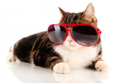 cat with glasses isolated on white