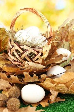 Easter eggs in wicker basket hidden in leaves