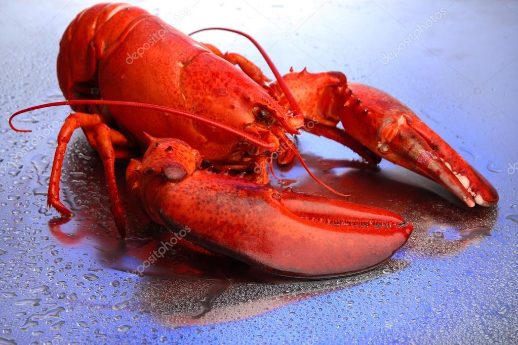 fancy lobster presentation - HD2000×1000