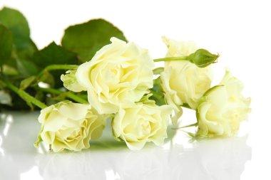 Beautiful white roses close-up isolated on white