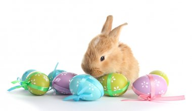 Fluffy foxy rabbit with Easter eggs isolated on white