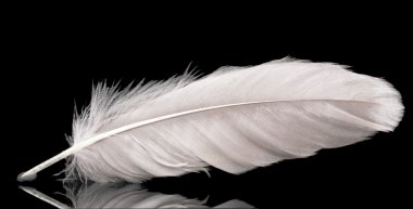 beautiful feather on black background