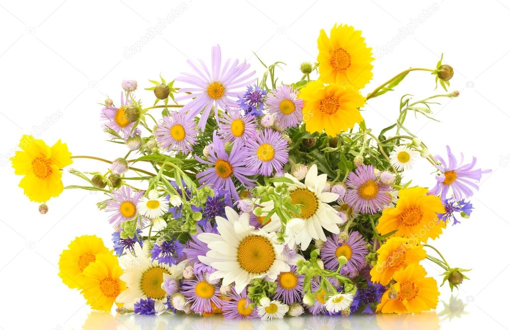beautiful bouquet of bright wildflowers, isolated on white