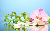 Fotografie Zátiší s zelený bambus rostlin, orchidej a kameny, na modrém pozadí