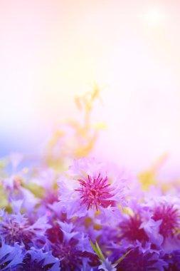 """Картина, постер, плакат, фотообои """"прекрасный букет васильковых цветов на открытом воздухе постеры печать картины фото фотографии"""", артикул 26016781"""