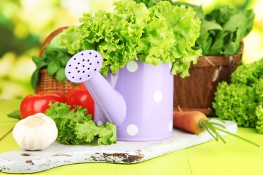 Fresh herb in watering can on wooden table on natural background