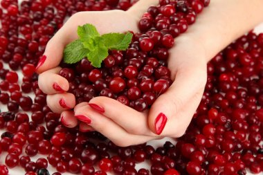 Woman hands holding ripe red cranberries, close u