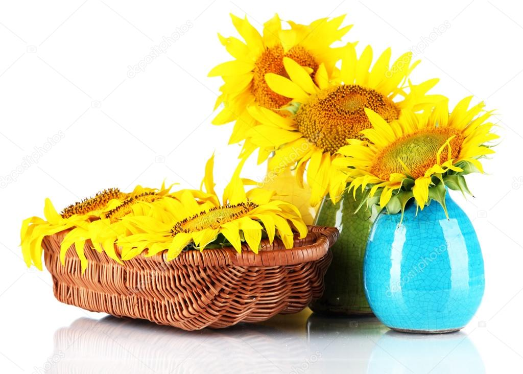 Beautiful Sunflowers In Color Vases And Wicker Basket Isolated On