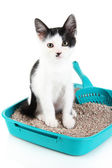 Fotografie Small kitten in blue plastic litter cat isolated on white