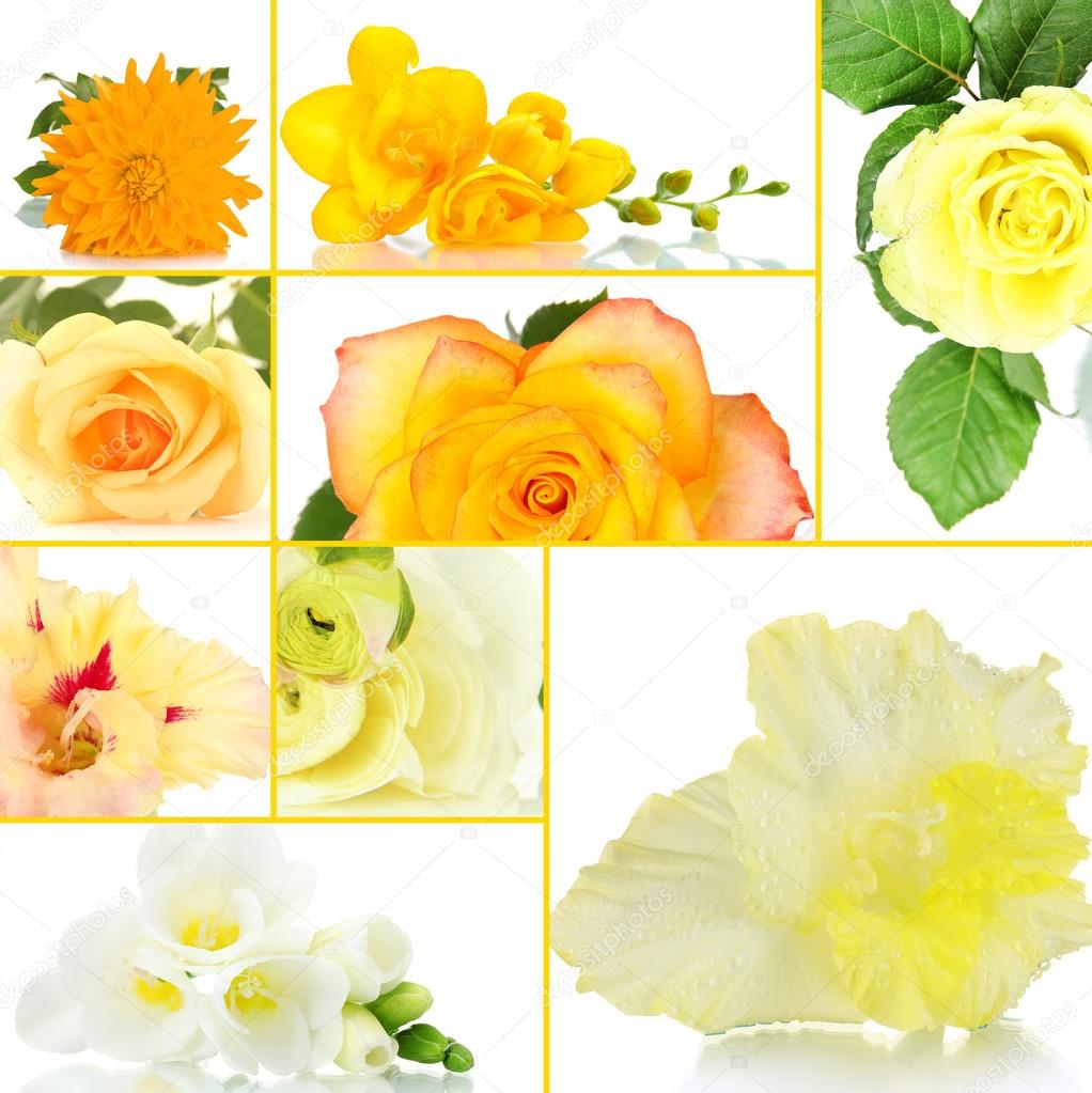 Collage of different beautiful flowers stock photo belchonock collage of different beautiful flowers photo by belchonock izmirmasajfo