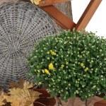 busch mit gelben bl ttern stockfoto 72234249. Black Bedroom Furniture Sets. Home Design Ideas