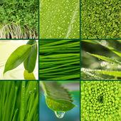 Koláž zelené trávy a listí