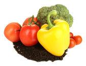 Gemüse mit Boden isoliert auf weiss