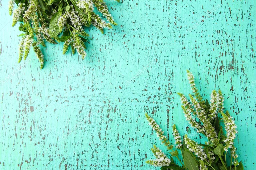 Flores De Menta Fresca Sobre Fondo Azul De Madera Fotos