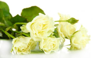 Beautiful white roses close-up isolated on white stock vector