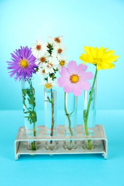 Flowers in test-tubes on light blue background