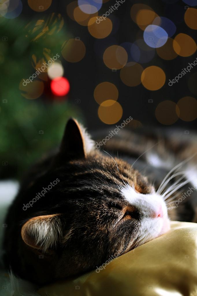 Nette Katze liegend auf Teppich mit Weihnachts-Dekor — Stockfoto ...