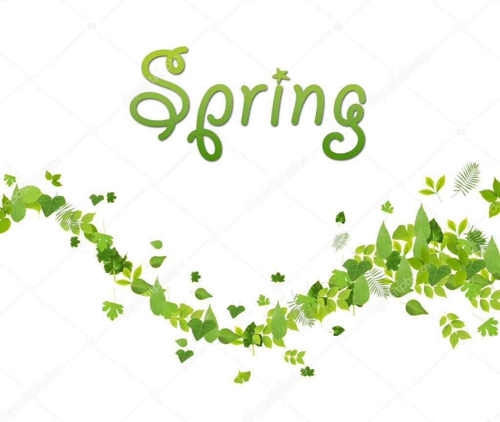 hojas de color verde primavera aisladas en blanco — Foto de stock ...