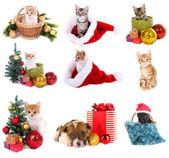 Fotografie Weihnachten Tiere isoliert auf weiss