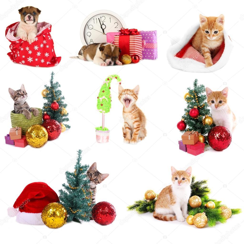 Bilder Weihnachten Tiere.Weihnachten Tiere Isoliert Auf Weiss Stockfoto Belchonock 37780595