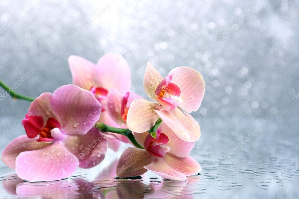 Bellissimo fiore orchidea con acqua scende su sfondo di for Orchidea acqua
