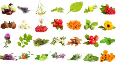 Collage of herbs and plants isolated on white