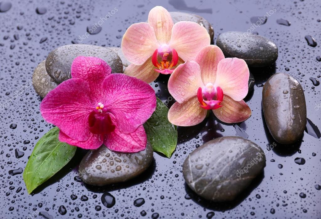 Composizione con bellissimo fiore orchidea con gocce d for Finestra con gocce d acqua