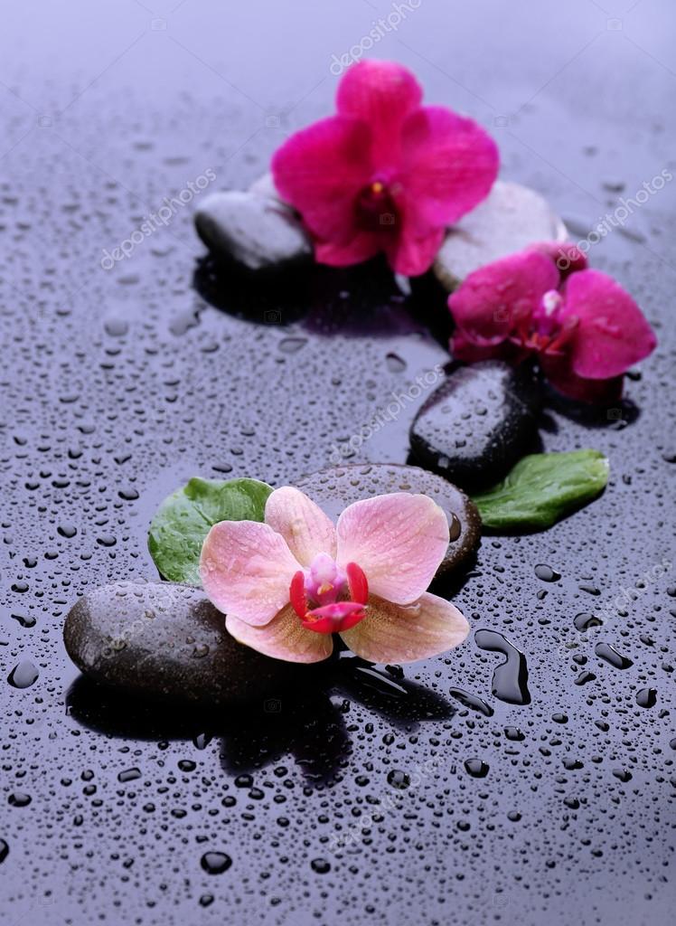 Composizione con bellissimo fiore orchidea con gocce d for Orchidea acqua
