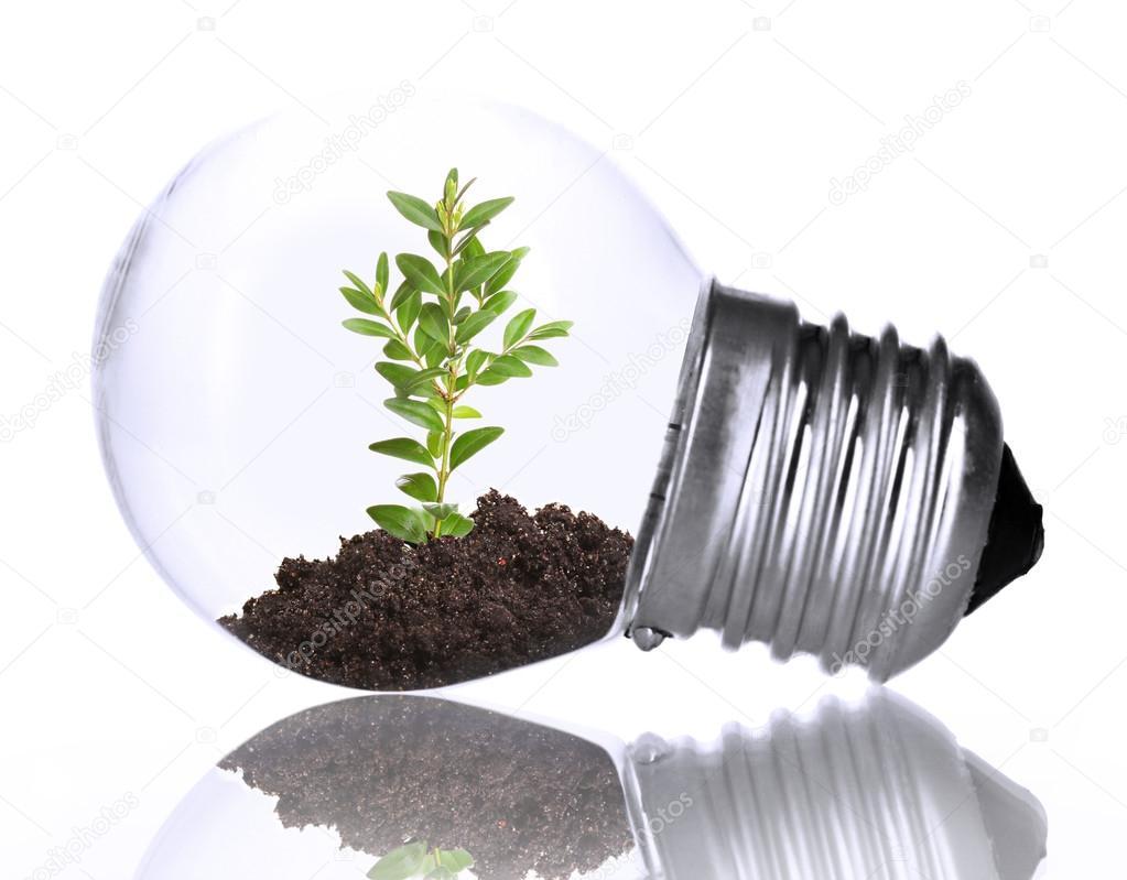 gr ne ko energie konzept pflanze w chst gl hbirne isoliert auf weiss stockfoto belchonock. Black Bedroom Furniture Sets. Home Design Ideas