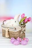 Fényképek fehér aranyos nyúl és a húsvéti összetétele