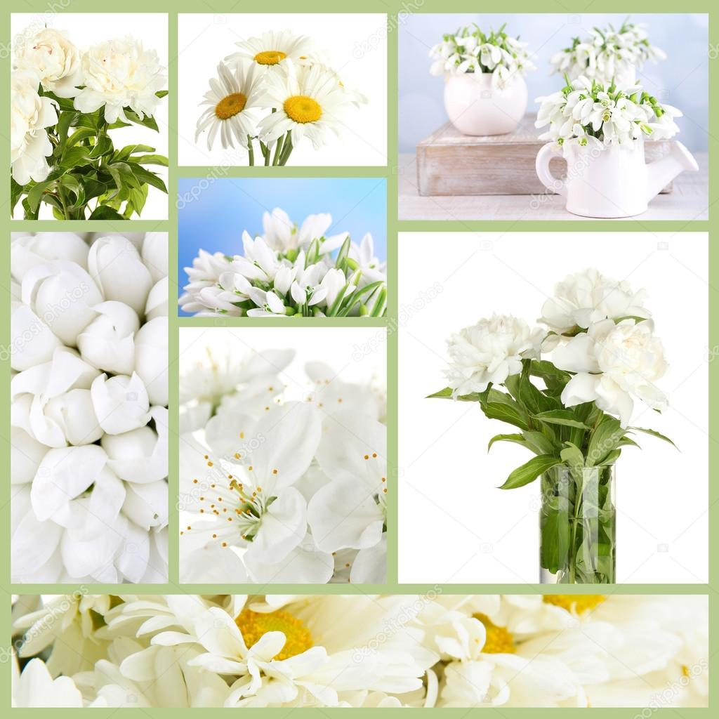 Collage Of Different White Flowers Stock Photo Belchonock 42019299