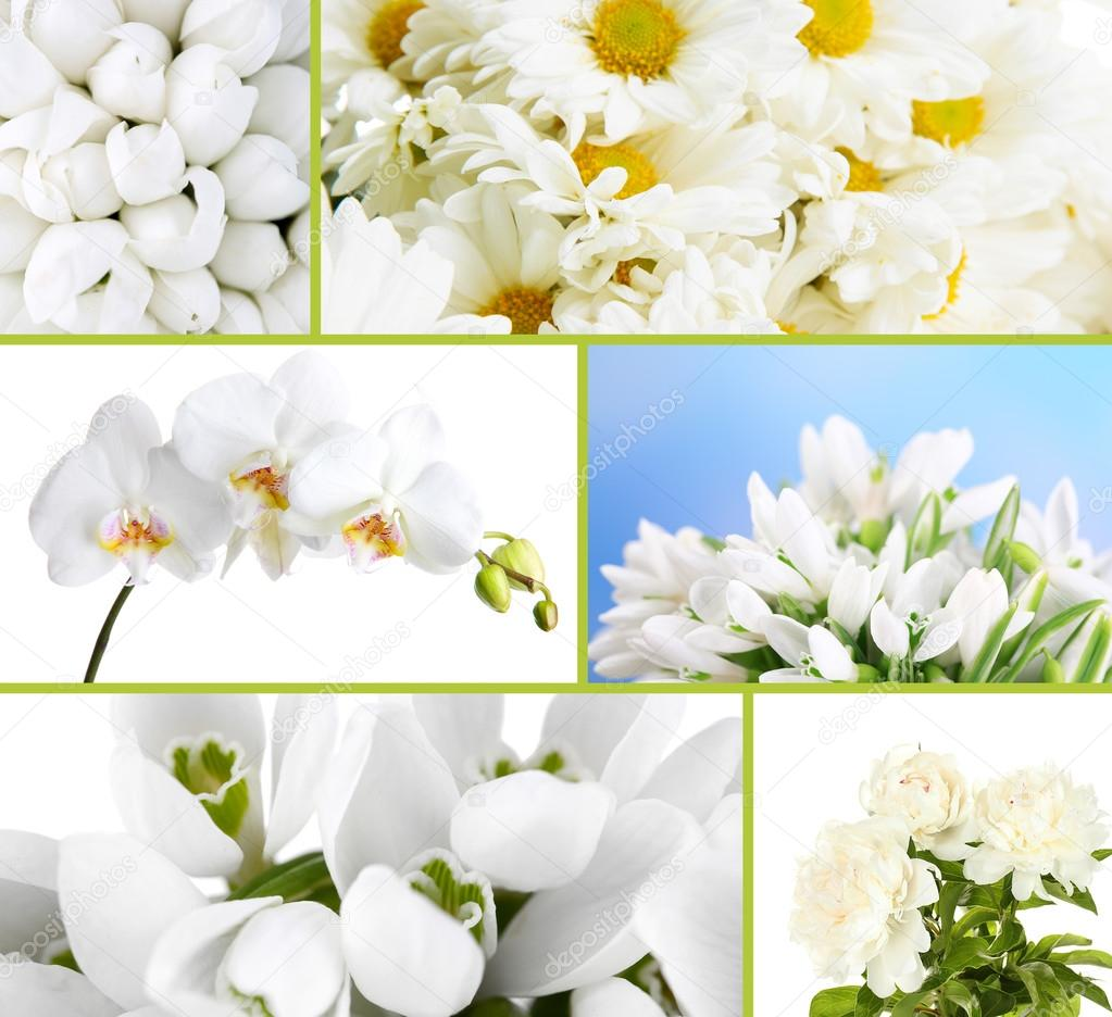 Different white flowers