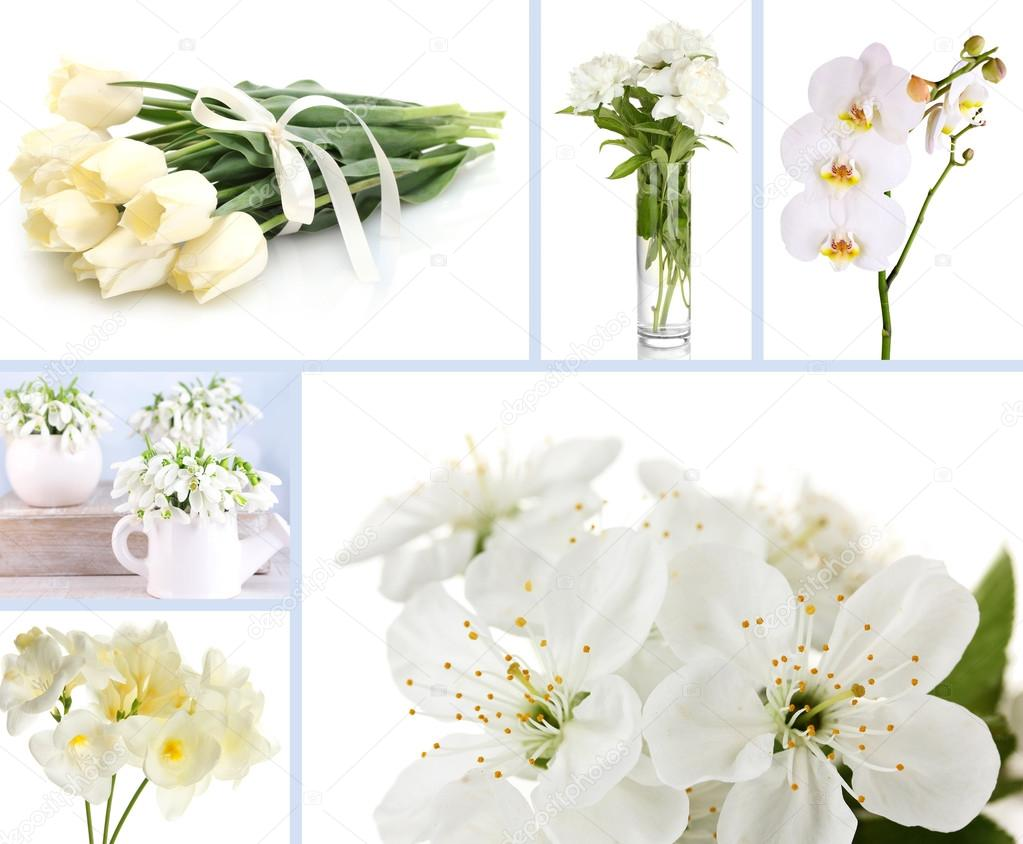 Collage Of Different White Flowers Stock Photo Belchonock 42754353
