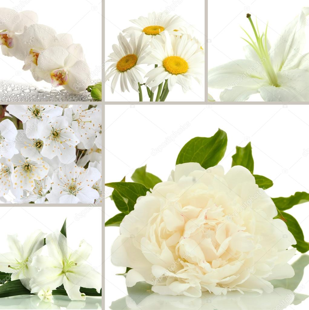 Collage Of Different White Flowers Stock Photo Belchonock 42754613