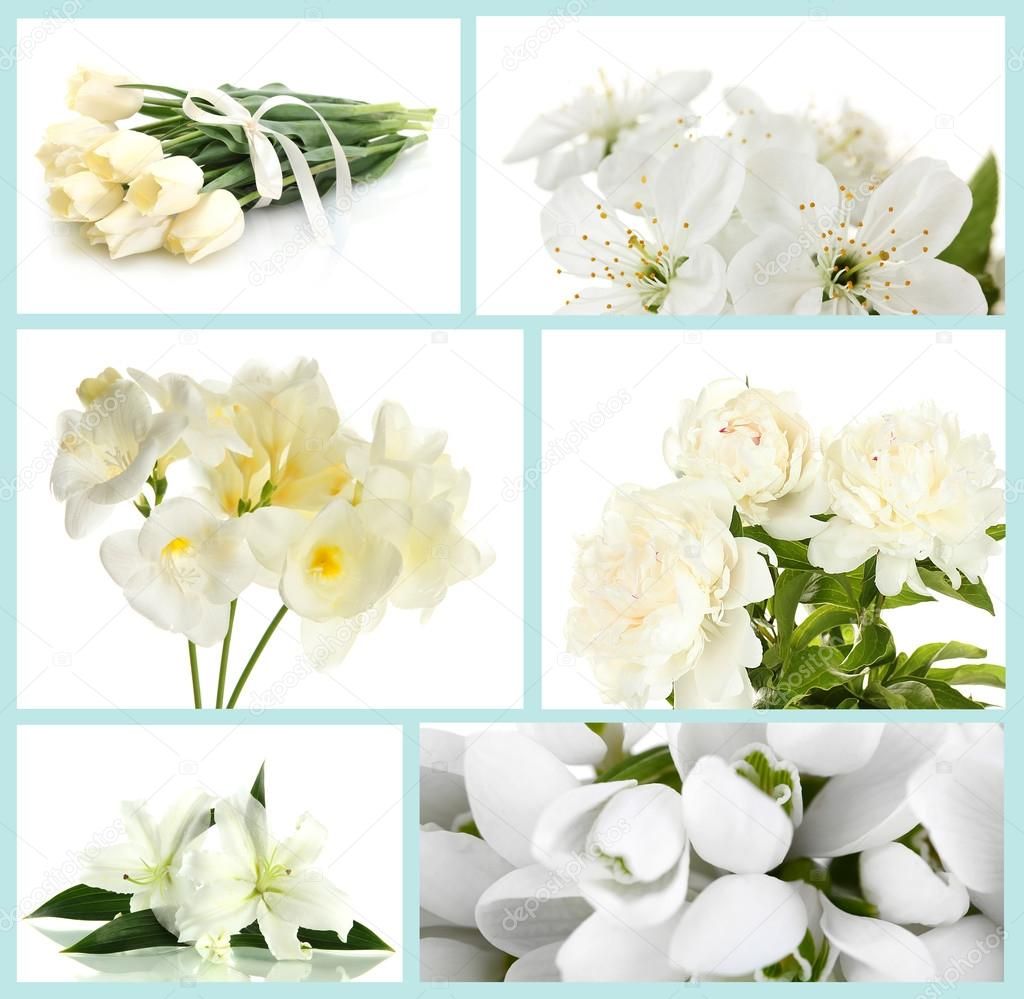 Collage Of Different White Flowers Stock Photo Belchonock 42754749