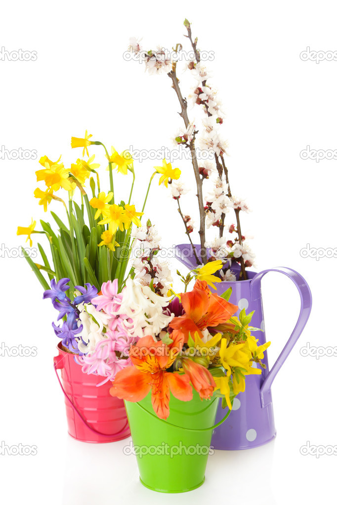 Beautiful flowers in metal buckets isolated on white stock photo beautiful flowers in metal buckets isolated on white photo by belchonock mightylinksfo