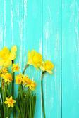 Krásné květiny na barevné dřevěné pozadí