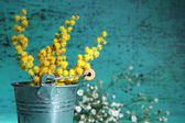 Fotografie Twigs of mimosa flowers in pail on blue wooden background
