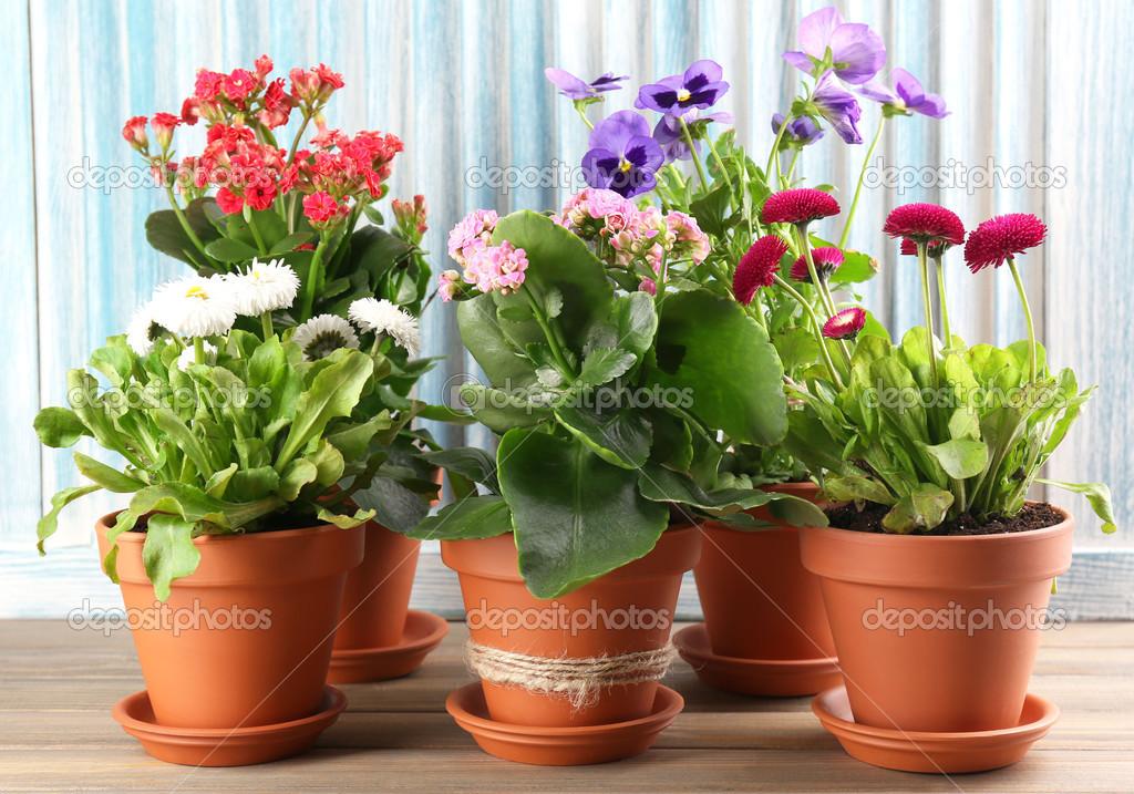 Piękne Kwiaty W Doniczki Na Tle Drewniane Zdjęcie