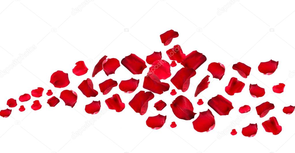 roseflakes White rose and glittering hearts black and white christmas tree in snow with snowman snow particles on red.