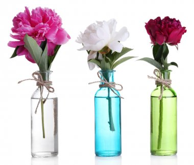 Beautiful pink peony flowers in glass vases, isolated on white