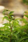 Zelená rostlina, venku