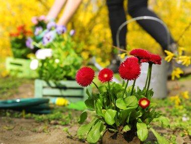 Gardening concept: beautiful flowers in garden with sun light
