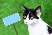Fényképek aranyos macska zöld háttér