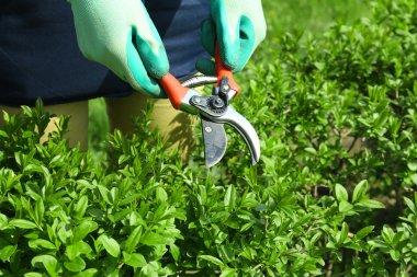 Woman Pruning bushes