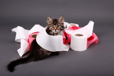 Kitten playing with roll of toilet paper