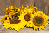 Beautiful sunflowers on wooden bench outdoors