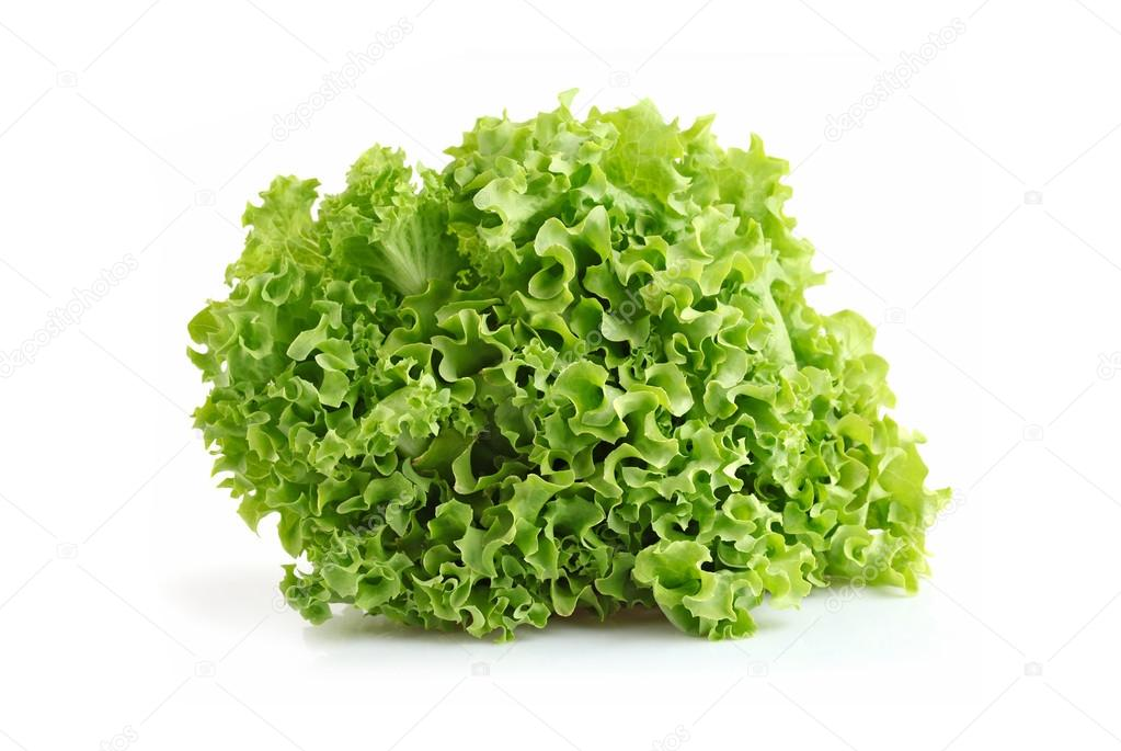 Single fresh boston butterhead lettuce isolated on white background