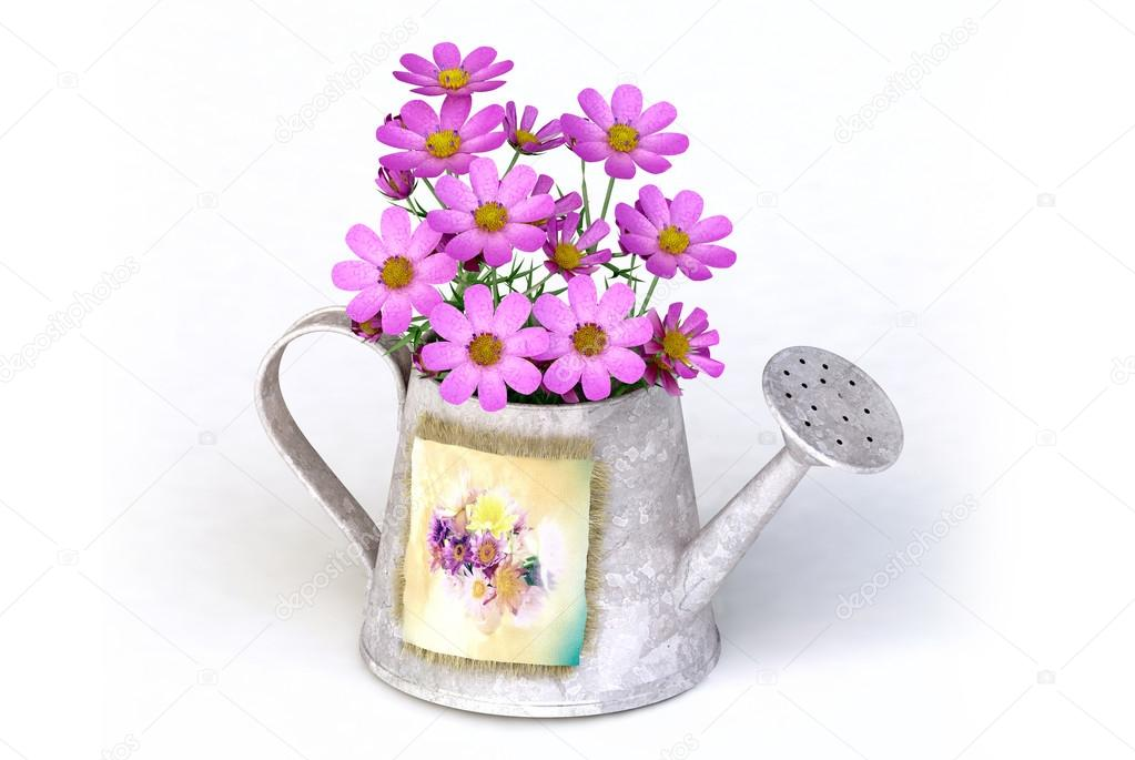 Kalanchoe flower in a orange water-pot isolated on white