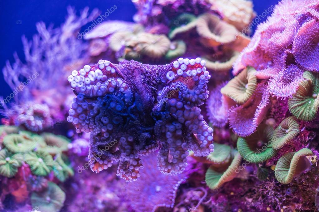 wild underwater world